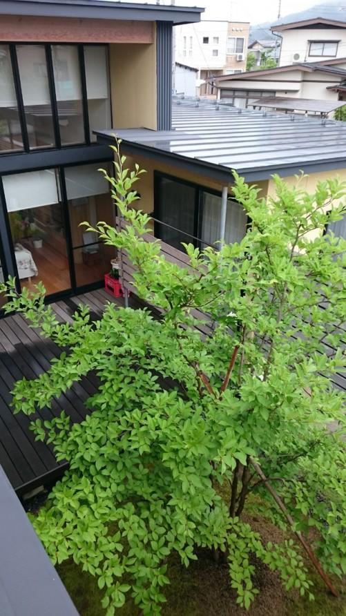 建築と植栽150606